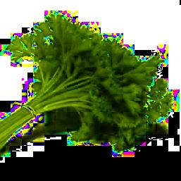 natka pietruszki-zioło na zdrowie według dietetyka